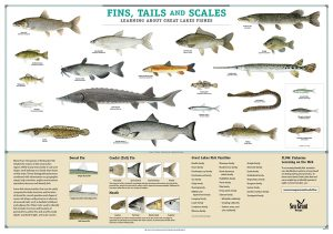 Fins-Tails-Scales-Fish-ID-poster