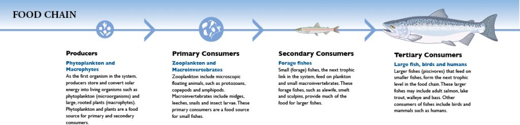food chain graphic2
