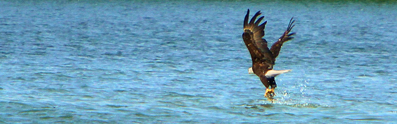Eagle's Eye Nature Cruises