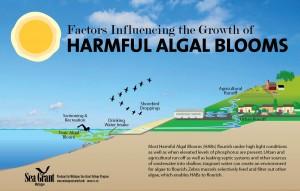 10-742 Harmful Algal Bloom illustration-1579px