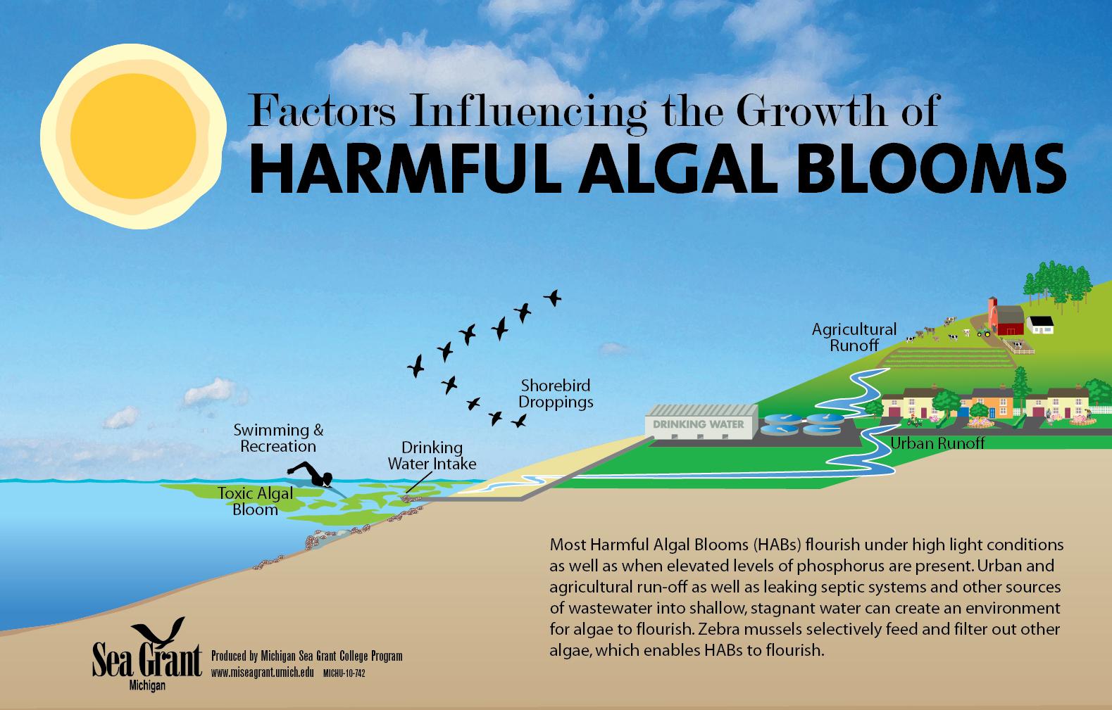 Harmful Algal Blooms in the Great Lakes | Michigan Sea Grant