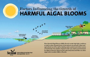 10-742 Harmful Algal Bloom illustration-web