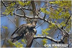 Bird tangled in monofilament