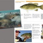 smallmouth-bass_COMBO