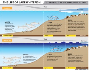 13-206-Lake-Whitefish-Climate-Current-and-Projected