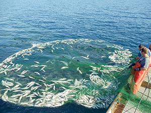 net-whitefish-DSC00086-sm