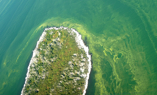 Harmful Algal Bloom Forecast