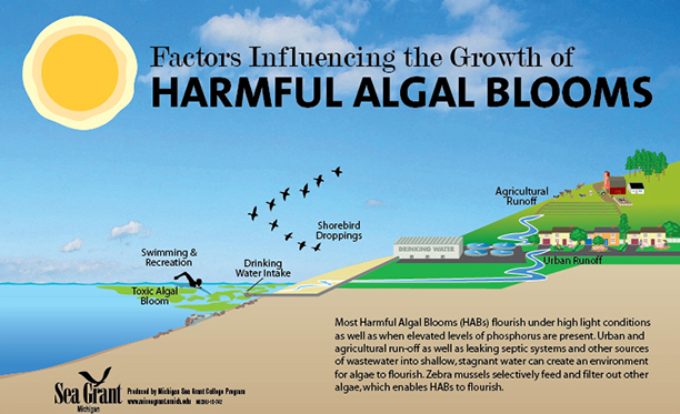 Harmful Algal Blooms in Lake Erie and Drinking Water
