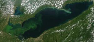MODIS Aqua satellite image of HAB forming in Western Lake Erie. Image courtesy of NOAA GLERL.