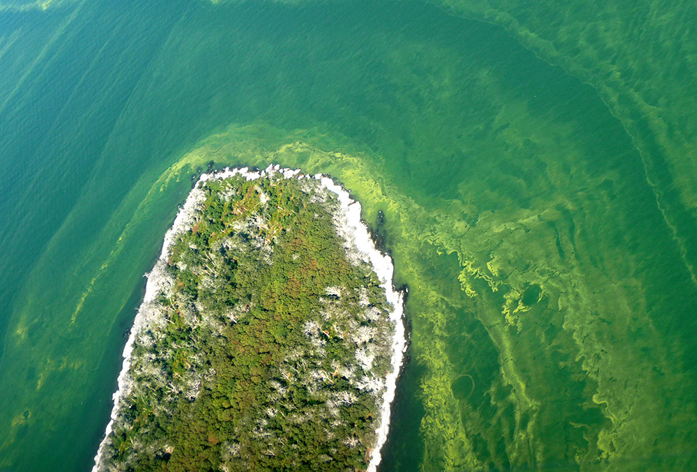 Algal bloom surrounds an island in Lake Erie, September 2009.