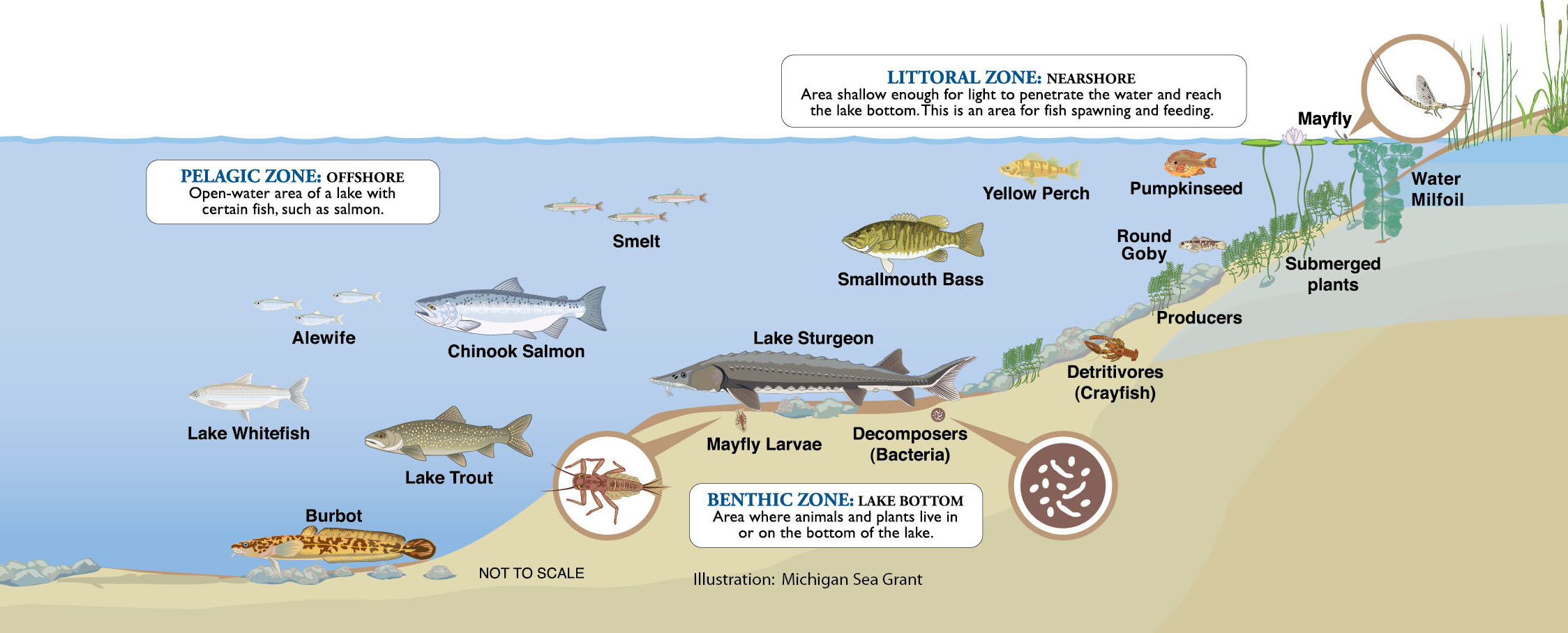 Great Lakes Ecosystem