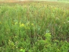 Lakeplain prarie