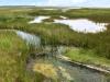 Wetland in Alpena, Michigan