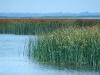 Lake St. Clair delta