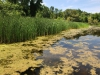 Coastal wetland Tobico Marsh