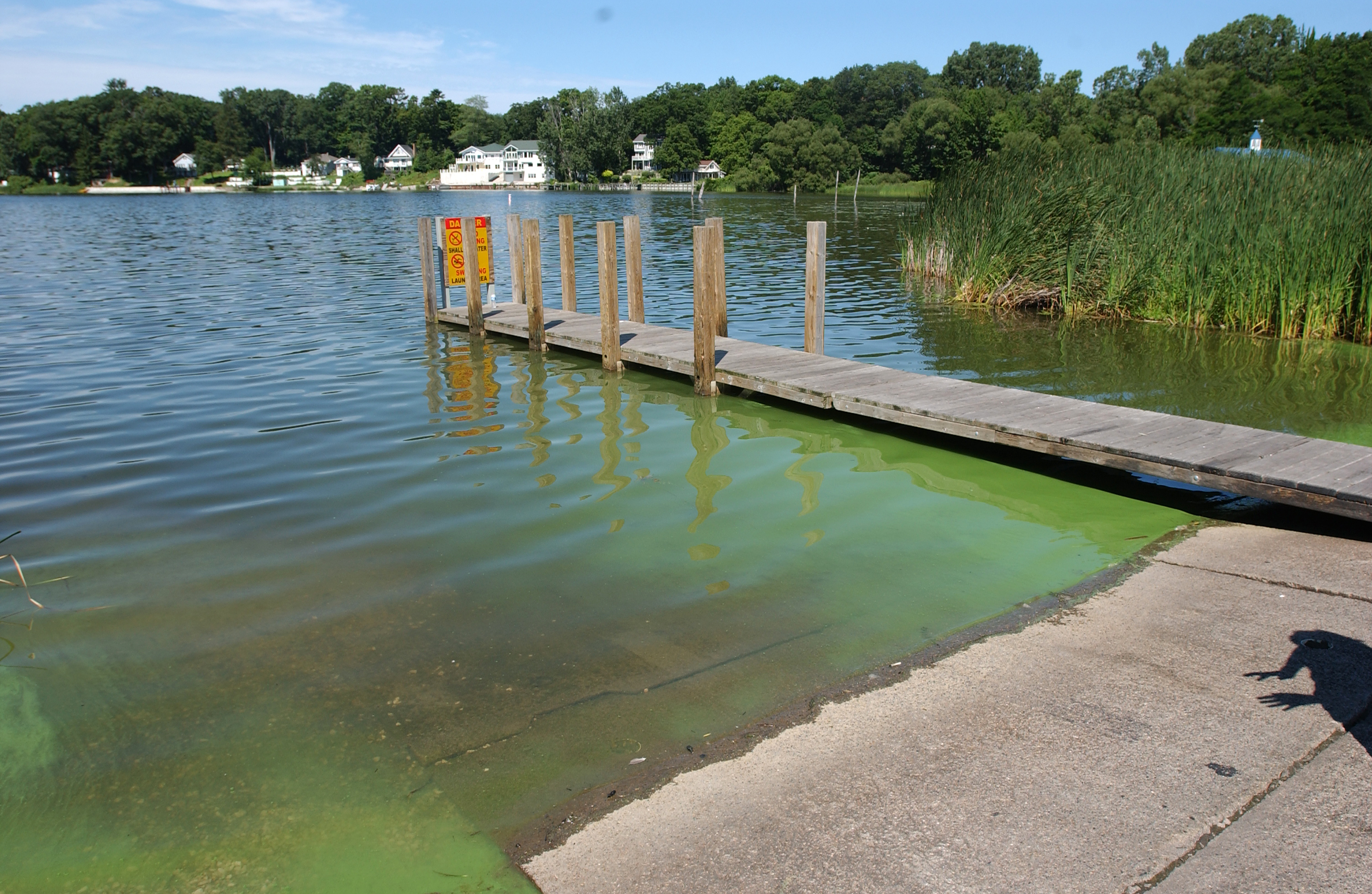 Harmful Algal Blooms in the Great Lakes   Michigan Sea Grant