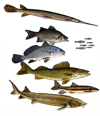 Fishes of the Grand