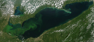 MODIS Aqua satellite image of HAB forming in Western Lake Erie. Image courtesy of NOAA GLERL.
