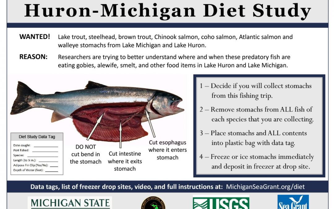 New video shows anglers how to remove stomachs for fish diet study
