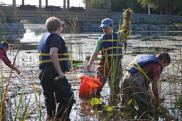 Alpena elementary students work alongside NEMIGLSI network coordinator, Meaghan Gass, to identify and remove invasive European frogbit. Photo: Michigan Sea Grant