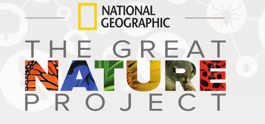 Join National Geographic for BioBlitz