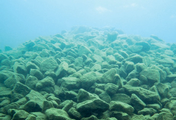 Photo of a restored reef under water