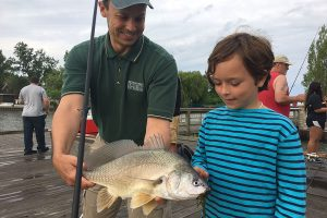 A freshwater drum fish just caught and presented to a young fisher
