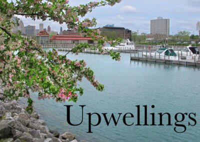 Upwellings cover, marina with a blossoming tree in foreground