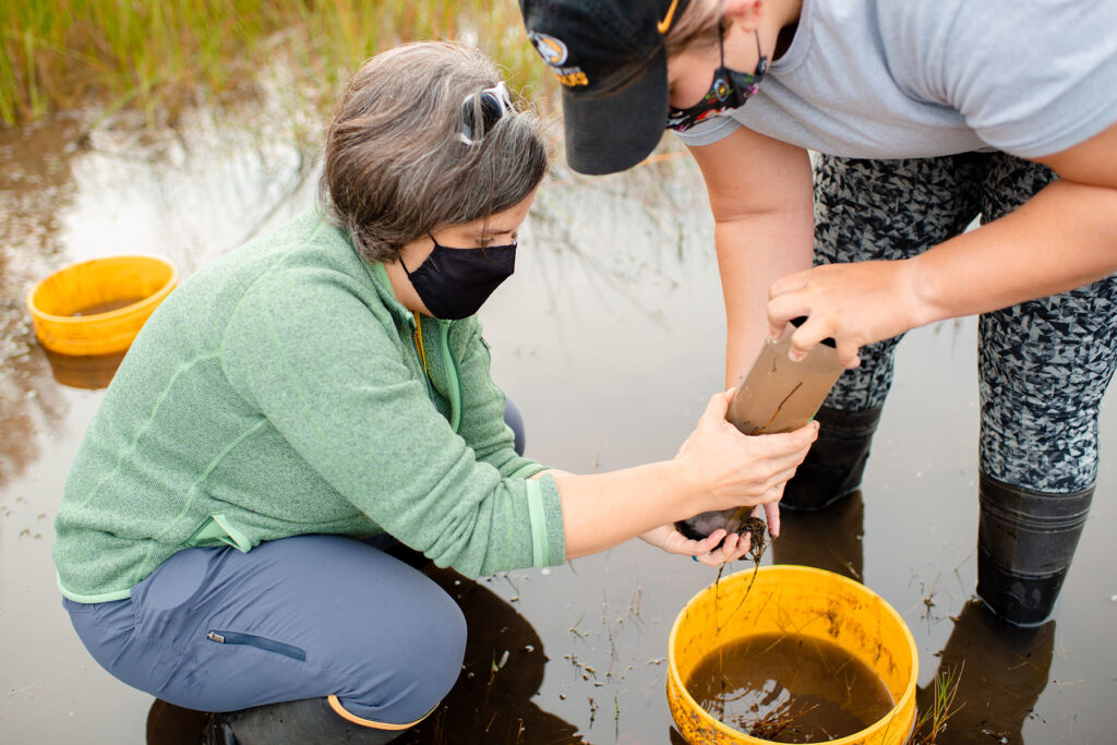 In this photo, researchers Erin K. Eberhard and Amy M. Marcarelli are collecting a sediment core sample from a wetland mesocosm, or experimental water enclosure, that has been enriched with nitrogen and phosphorus to take back to the laboratory for analysis.