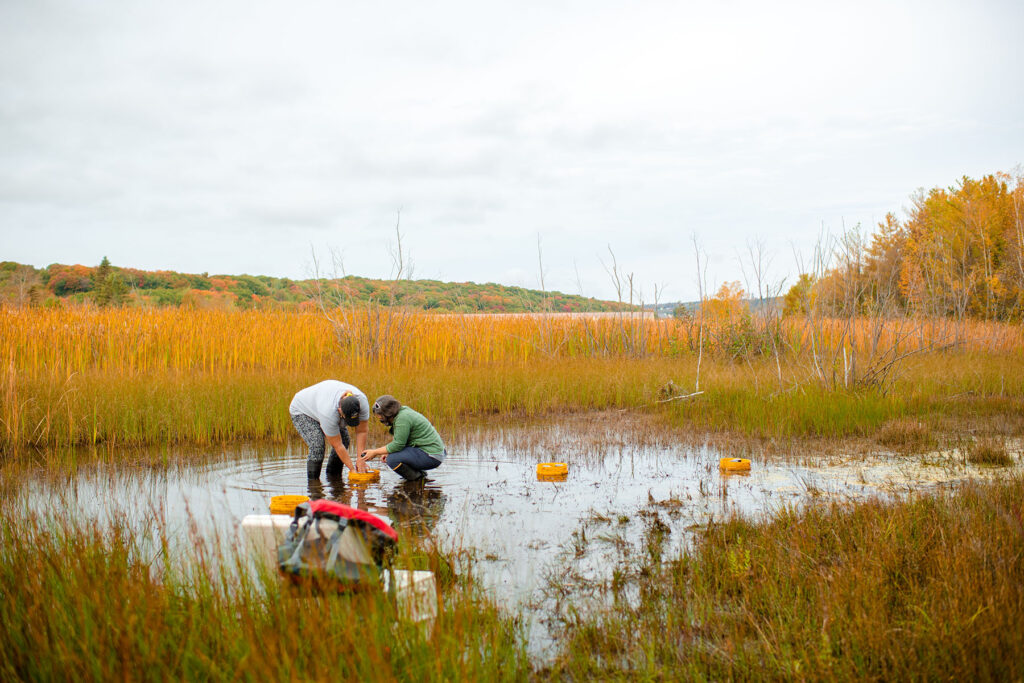 In this photo, researchers Erin K. Eberhard and Amy M. Marcarelli from Michigan Tech are taking samples at 1 of 15 study locations in five areas around Lake Superior and Lake Huron