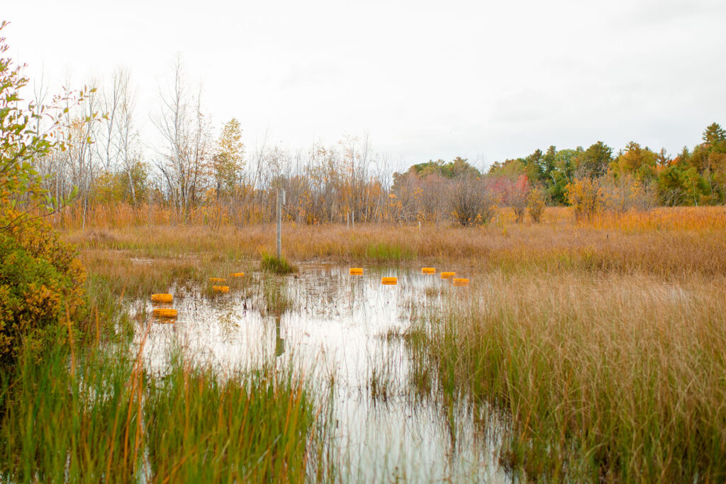 photo of wetland with research equipment